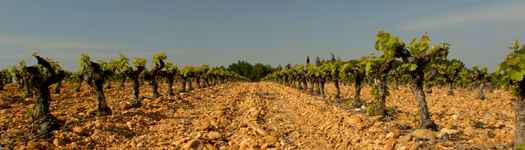 Horizon terroir
